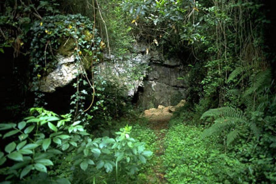 El Pendo: la cueva de las ciervas rojas