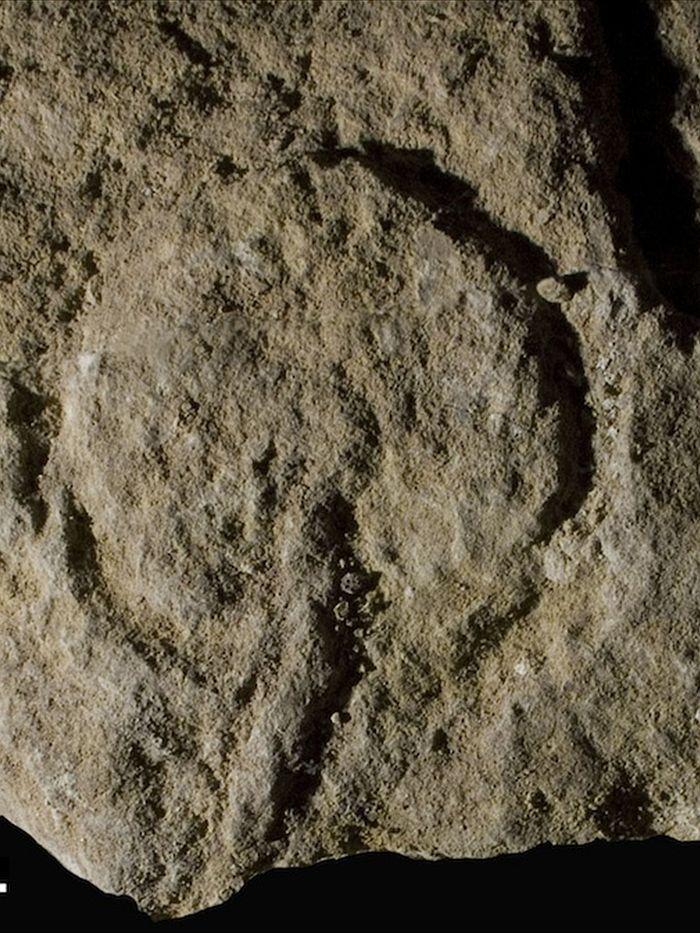 Abri Castanet: el tesoro escondido de un techo caído