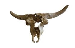 Exposición sobre el cráneo de Kiputz IX en el Museo San Telmo